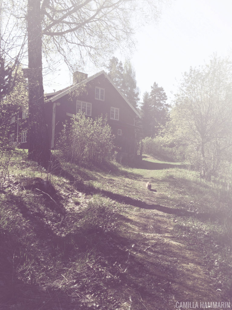 Katten Miso och huset i Dals Långed